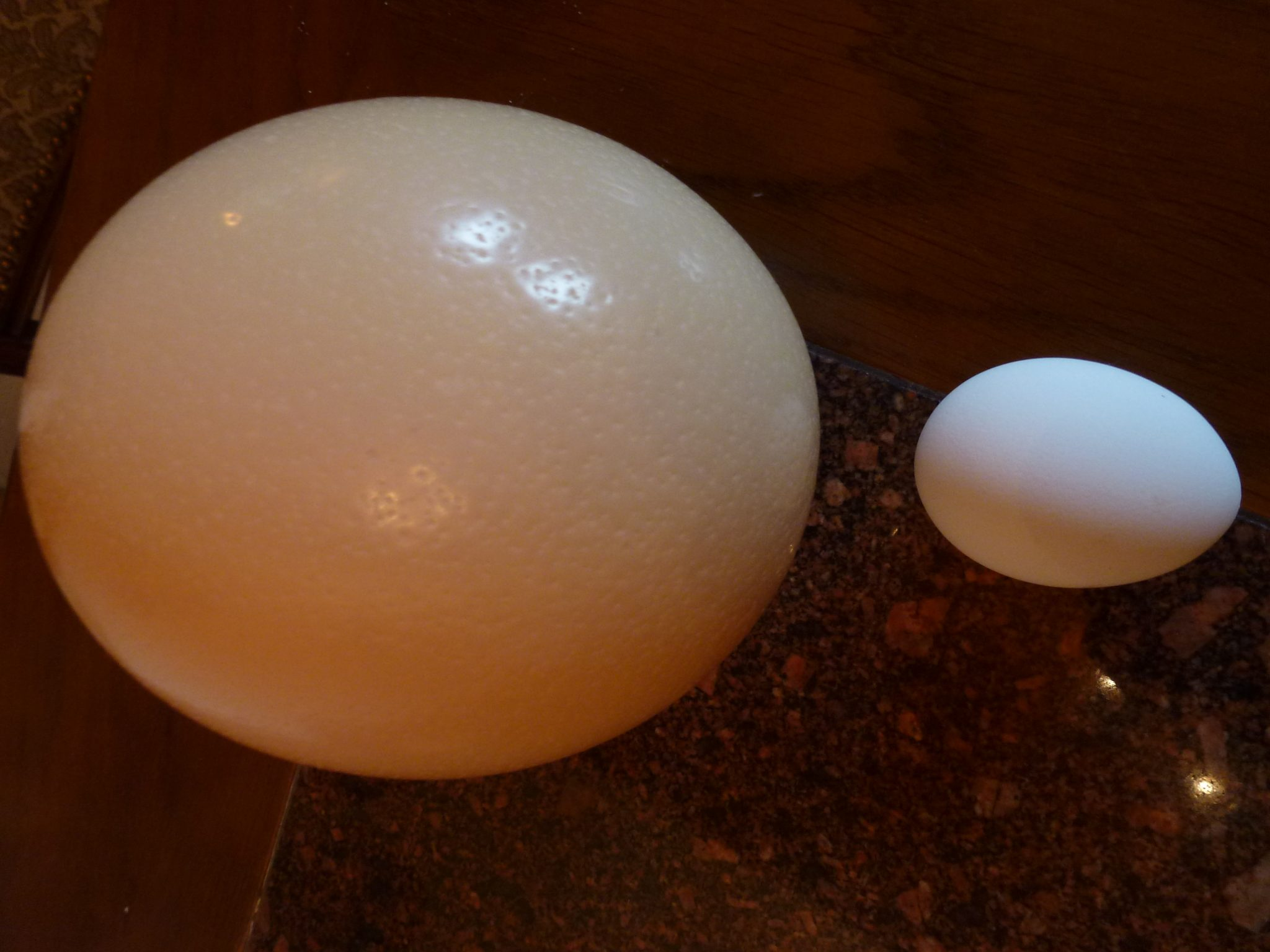 ostrich egg compared to chicken egg