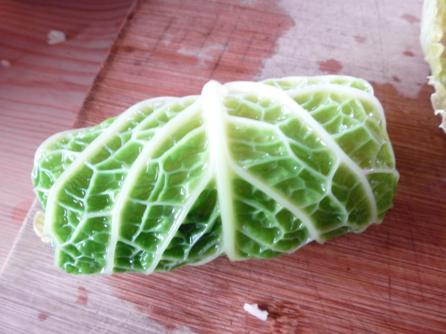 Cabbage leaf folled