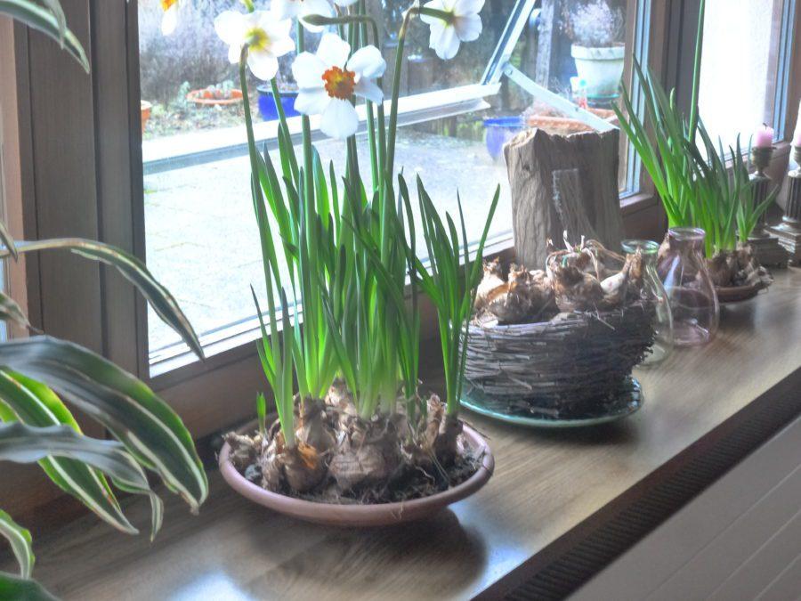 winter tuinieren