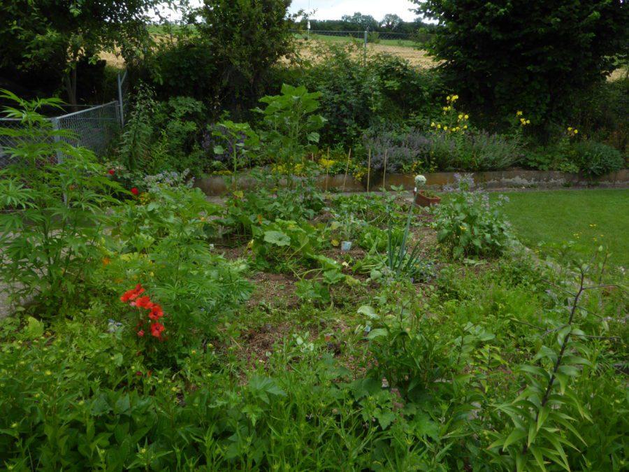 summer organic garden 2020