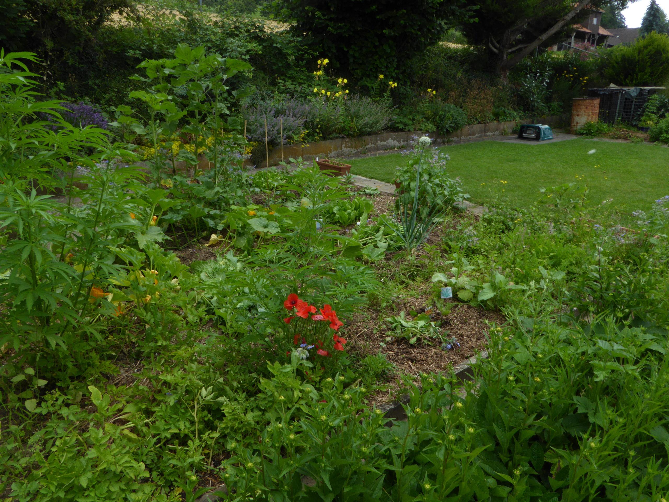 garden over-view