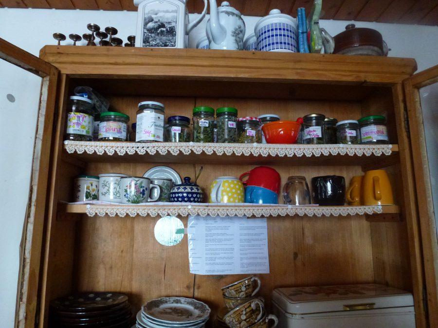 i primi giorni della mia raccolta del tè
