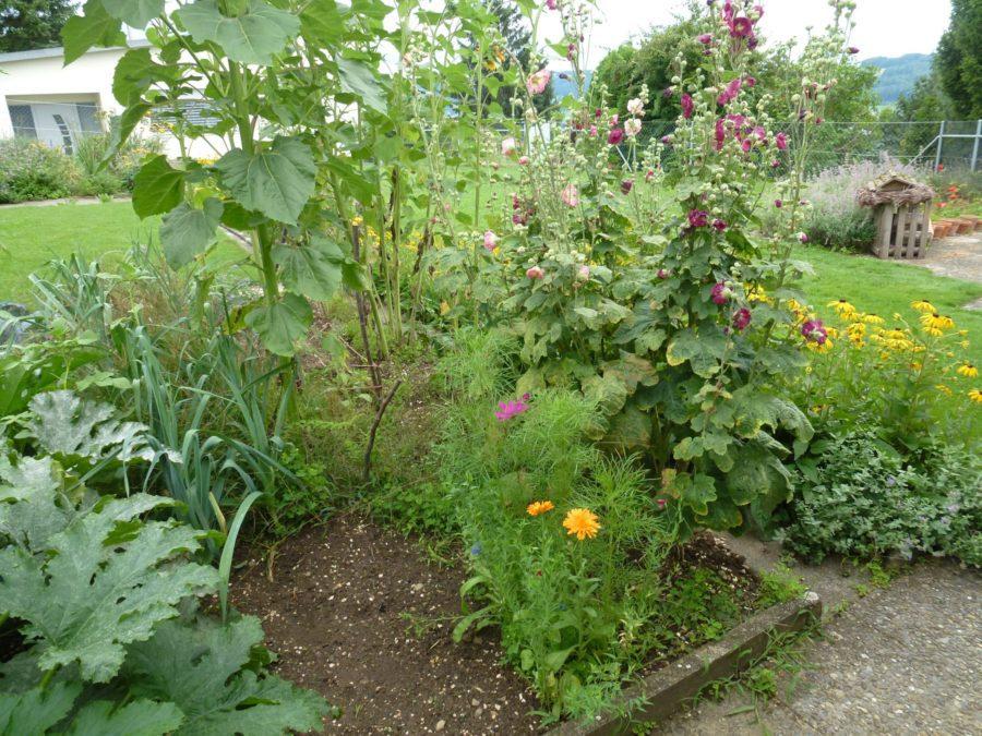 Caléndula, de color naranja brillante en mi jardín