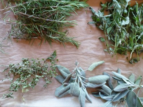 sage, rosemary, verbena and spearmint drying for winter storage
