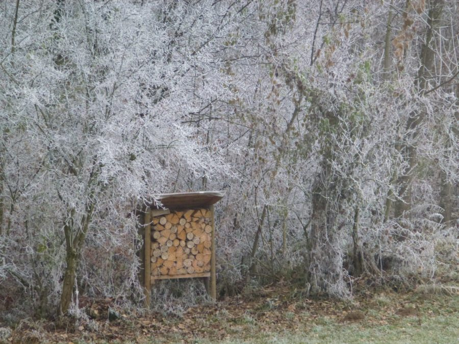 wild insect house